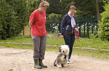 dressage chien yvelines 78 et idf