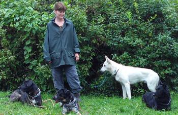 formation metier du chien yvelines 78 et idf