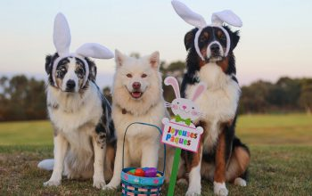 Bonne fête de Pâques !