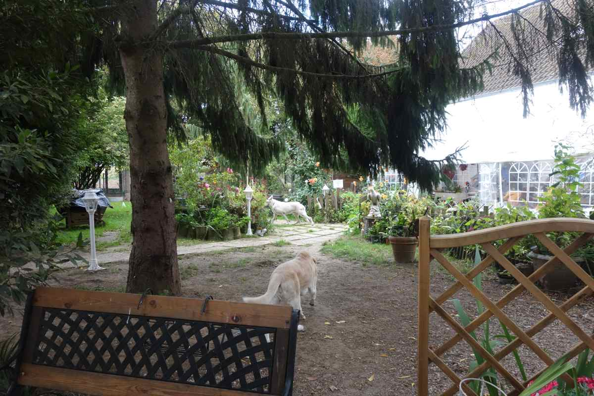 pension chien 78