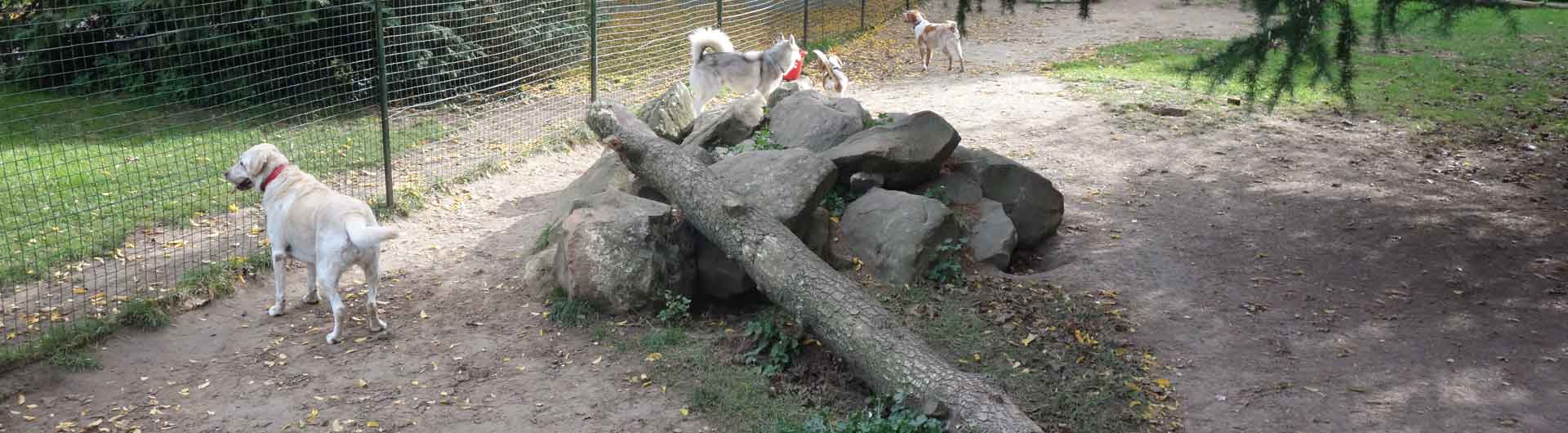 pension-chien-yvelines