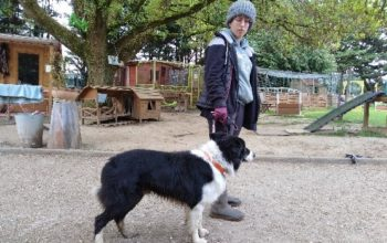 Urgent ! Ghost, chien border collie à placer