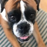 pension chiens yvelines