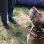 education chien yvelines