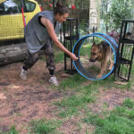 parcours agility yvelines
