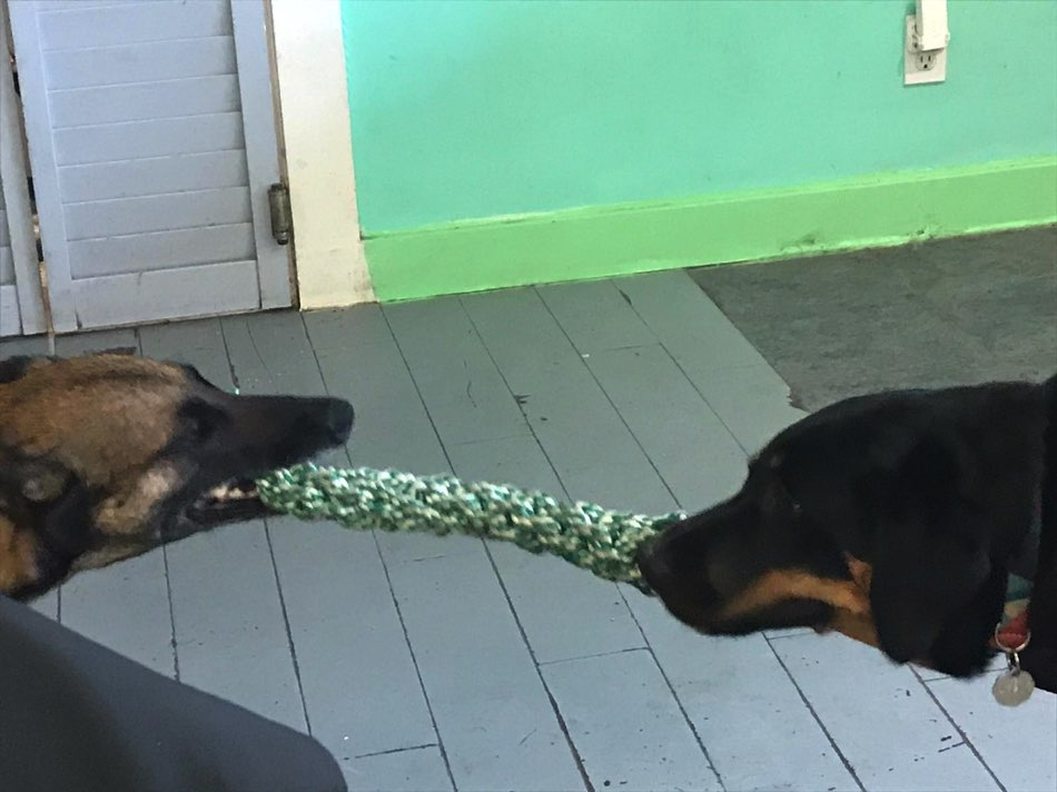 education chien 78 jorel