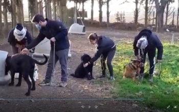 Séances d'éducation canine et connivence canine au centre Canin Félin JOREL