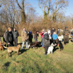 randonnées canines parc du vexin