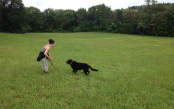 Randonnées éducatives canines dans le parc national du Vexin