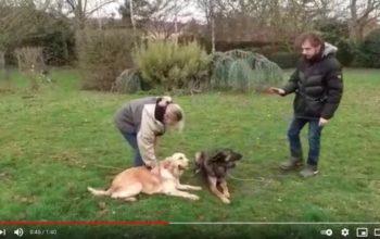 Cours collectifs d'éducation canine