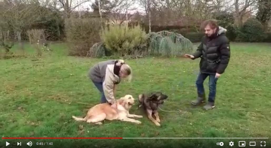 cours educateur canin 78