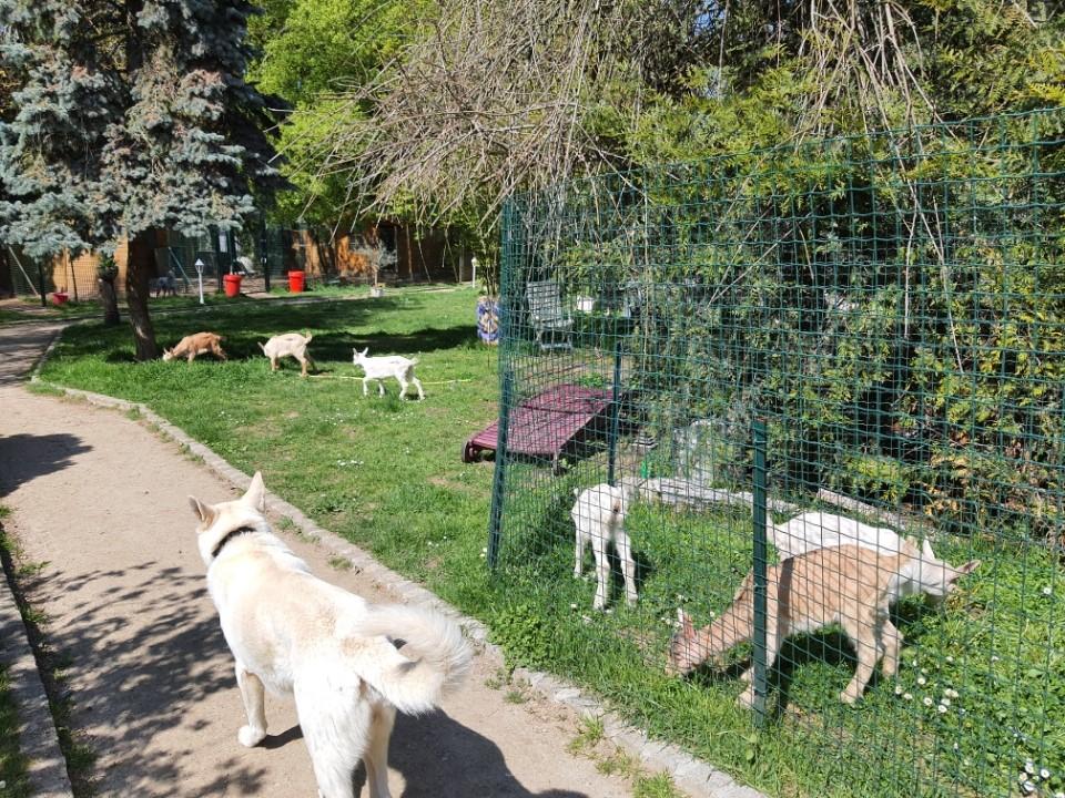 chevrette et chiens yvelines